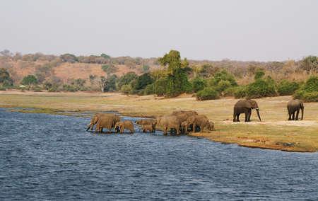 Familia de elefantes en la orilla del río Chobe, Botswana Foto de archivo - 26891440