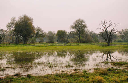 remoteness: Flooded landscape of pools and trees on winter in Moremi game reserve, Botswana
