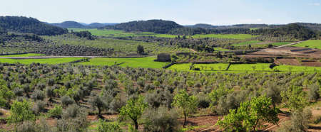 Plantation fields near Vallbona de les Monges in Tarragona province, Catalonia, Spain