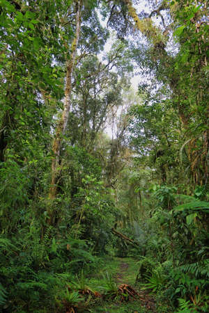 Interior of humid cloudforest between Antisana and Sumaco Reserve, Ecuador photo