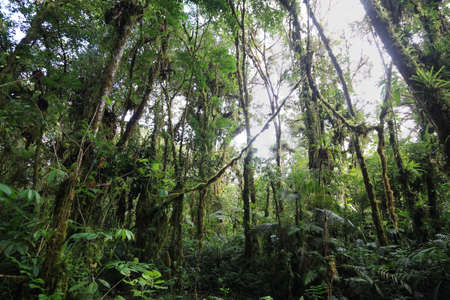 san isidro: Interior of humid cloudforest between Antisana and Sumaco Reserve, Ecuador Stock Photo