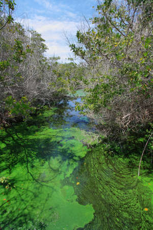 photosynthetic: Green puddle and mangroves landscape, Isabela island, Galapagos, Ecuador Stock Photo