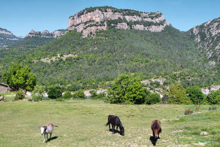 Landscape of mountains in Serra de Busa with horses grazing around, Catalonia, Spain photo