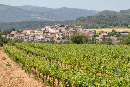 catalonia: Vineyards in spring with picturesque village at background, Catalonia, Spain Stock Photo