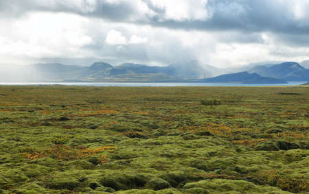 Moss plains near Pingvellir national park in Iceland Imagens