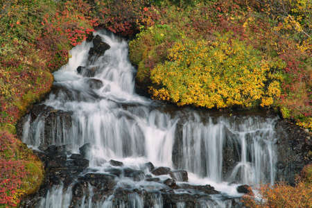 wild silky white: Hraunfossar waterfall in autumn, Iceland