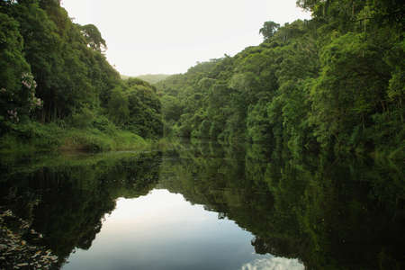 Forest landscape in Half collared kingfisher trail of Wilderness area, tsitsikamma national park, South Africa Imagens