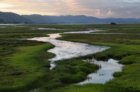 夕暮れ時、南アフリカ ナイズナ湿地