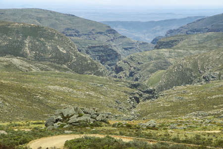 south africa soil: Wild Protea field and mountains in Swartberg pass, South Africa