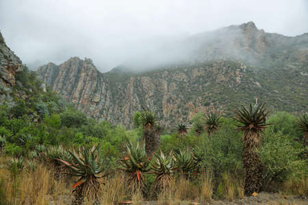south africa soil: Majestic rocky redish mountains and cactus  in Seweweekspoort pass, South Africa