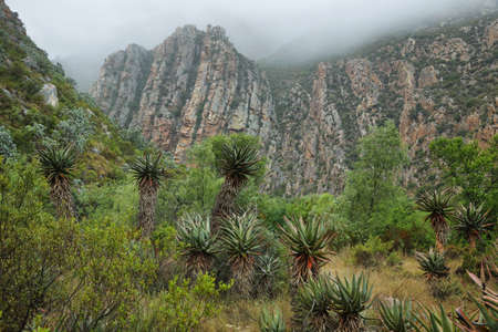 inhospitable: Majestic rocky redish mountains and cactus  in Seweweekspoort pass, South Africa