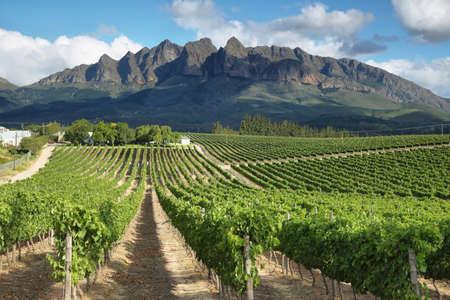 viñedo: Paisaje de los viñedos cerca de Wellington, Sudáfrica Foto de archivo