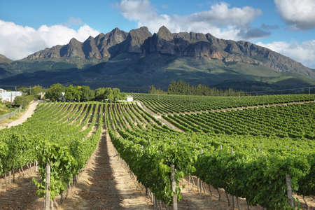 and south: Vineyards landscape near Wellington, South Africa Stock Photo