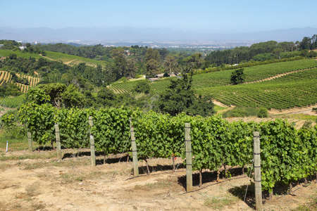 cape town: Vineyards landscape in Constantia valley, South Africa Stock Photo