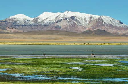 salar: View of Salar de Tara with mountains at background, Chile