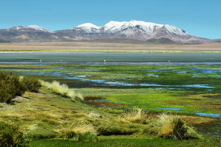 high plateau: View of Salar de Tara with mountains at background, Chile