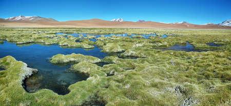 hill of tara: Quepiaco lagoon known as Vegas de Quepiaco in Atacama desert, Chile Stock Photo