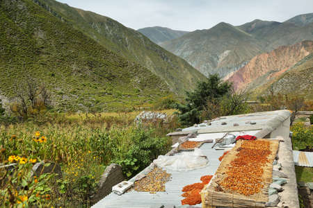high plateau: Views of peaches drying and mountains at background in the way to San Isidro village, Salta province, Argentina Stock Photo