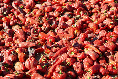 puna: Views of sweet red peppers drying in Cachi, Salta province, Argentina Stock Photo