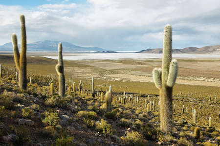 high plateau: Salar de Coipasa on the border of Chile and Bolivia viewed from Chile.