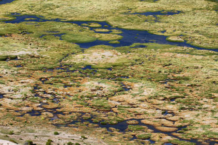high plateau: Wetland area in volcano isluga national park, Chile