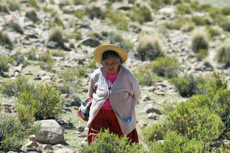 high plateau: SALAR DE SURIRE, CHILE - APRIL 15: Indigenous old woman shepherd that live in hard conditions of the high plateau (altiplano) on April 15, 2015 in northern Chile close to Salar de Surire