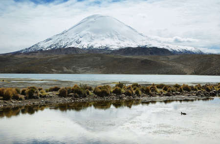 ravel: Snow capped Parinacota volcano reflected in Lake Chungara, Lauca national park, northern Chile. The altitude of this volcano is 6348m above the sea. Stock Photo