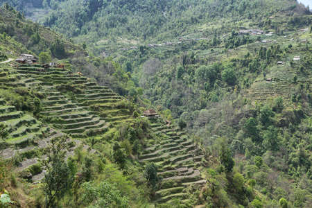 small houses: Plantation fields and small houses from near Landruk village, Nepal