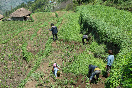 TOLKA, NEPAL - APRIL 19, 2016: nepalese young men working in a field near Tolka village, Nepal. Toka is a picturesque village along Annapurna base camp hiking trail in Nepal
