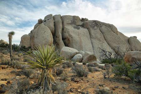 joshua tree national park: Boulders and Joshua Trees in Joshua Tree National Park, California.