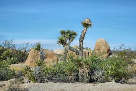 joshua tree  national park: Curious rocks and cactus in Joshua Tree National Park, Mojave Desert, California