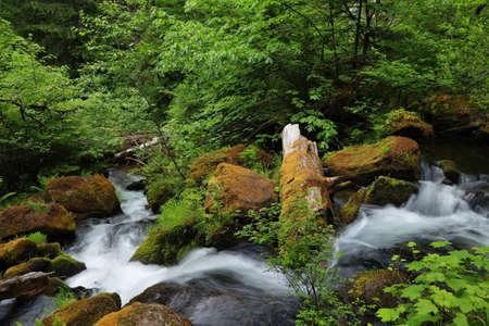 oregon cascades: Silky water and lush vegetation near Watson falls, North Umpqua River, Oregon Stock Photo