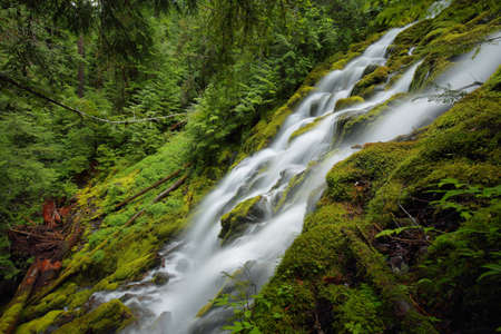 oregon cascades: Beautiful Proxy falls in Mc Kenzie pass, Oregon.