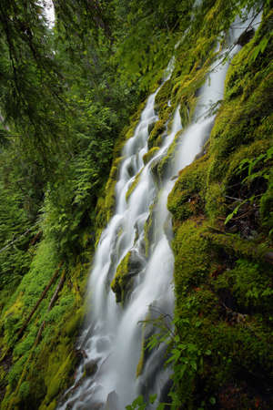proxy falls: Beautiful Proxy falls in Mc Kenzie pass, Oregon.
