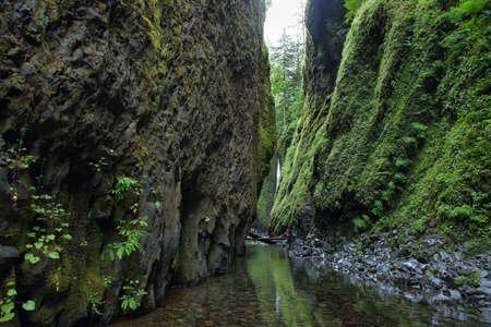 Oneonta Gorge. Columbia River Gorge, Oregon