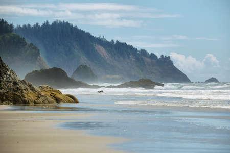Mening van wild strand in Oregon met een hond die dichtbij Kanonstrand, de VS doorweken