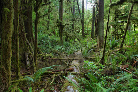sol duc: Sol Duc falls trail forest in Washington state coast, USA Stock Photo
