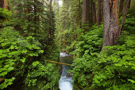 sol duc: River along Sol Duc falls trail, Olympic national park, WA, US