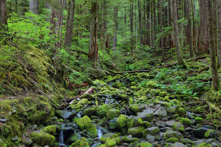 sol duc river: River with mossy stones along Sol Duc falls trail, Olympic national park, WA, US