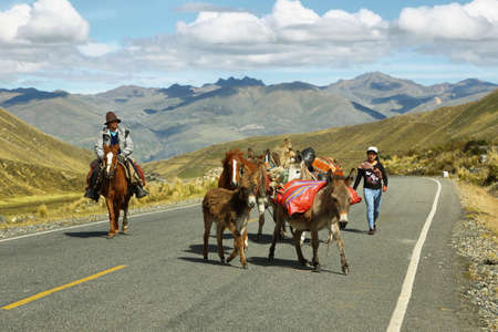 ancash: Ancash, Peru - June 10, 2017: donkeys and horses in the middle on the road in the way to Huanuco in Ancash province, Peru.