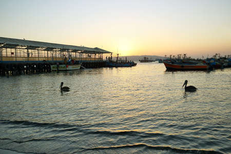 Paracas, Peru - June 15, 2017: Peruvian pelican and boats in Paracas pier at sunset in Paracas, Ica, Peru Editorial