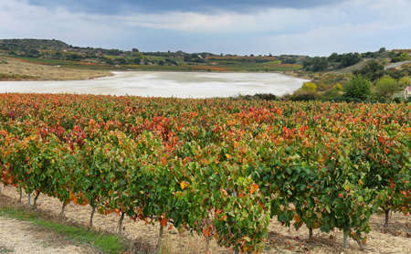 Autumn Vineyards and dry Carravalseca lake at Rioja Alavesa, Basque Country, Spain Stock Photo