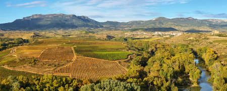 Landscape with vineyards at La Rioja from Briones village, Spain
