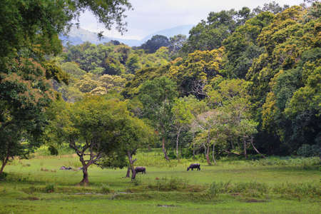 This amazing wildlife park is located in Kerala southern state of India. Sprawled over an area of 925 Sq .km., Periyar is one of the 27 tiger reserves in India. Stock fotó