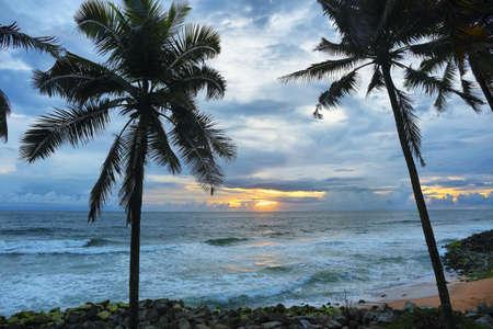 Palm trees in Varkala tropical beach at sunset, Kerala, South India