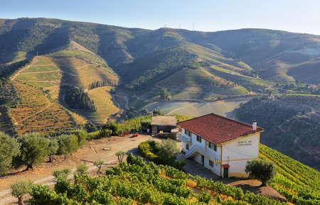 Sao Joao da Pesqueira, Portugal - August 5, 2020: Views of Douro vineyards near Sao Joao da Pesqueira village in Portugal