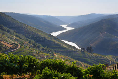 Amazing views of Douro vineyards and river from Valen