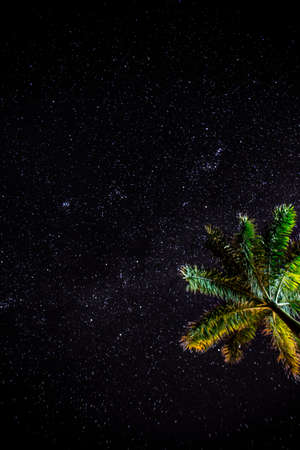 Looking up at the stars with a palm tree in the image