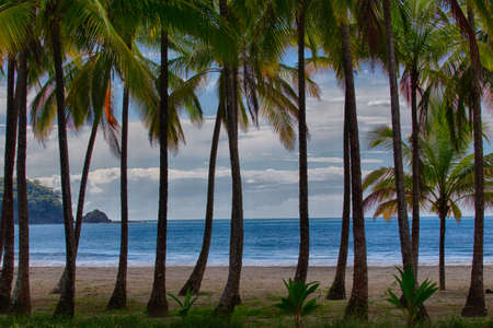 The blue ocean and cloudy sky can be seen through a row of palm trees on the beach Imagens