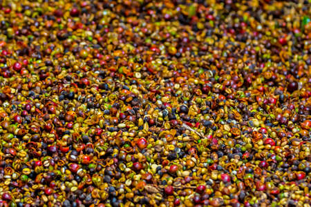 fermenting: These coffee beans are in the fermenting process before they go out to dry in the sun.  The bright colors are organic and natural .